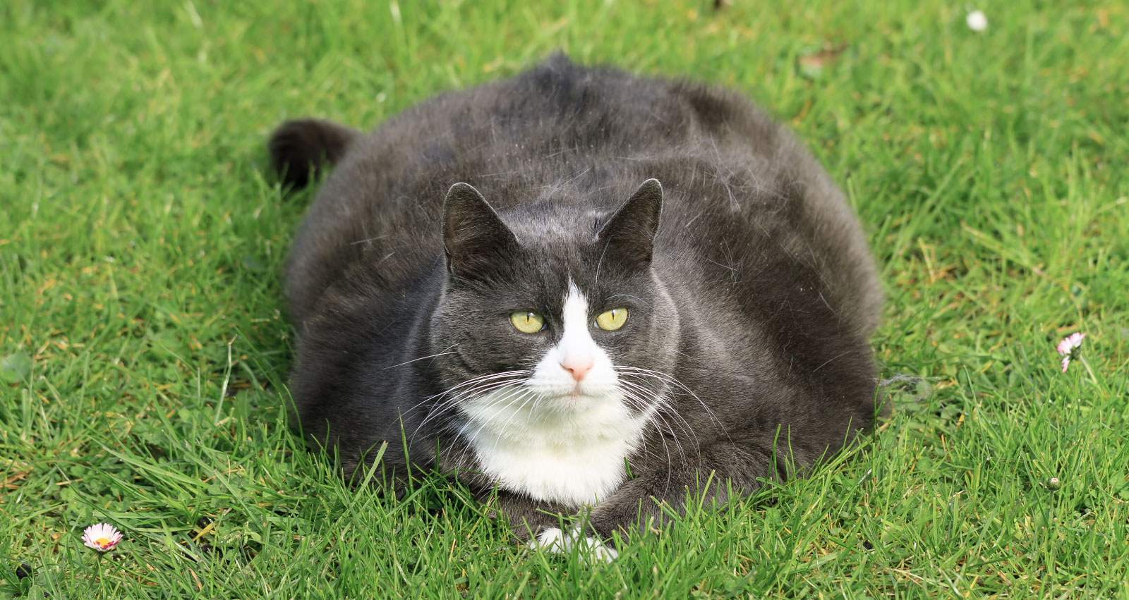 What Everyone Should Know About Fat Cats - Dr. Basko ...